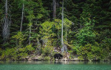 Einsamer Bär von Joris Pannemans - Loris Photography