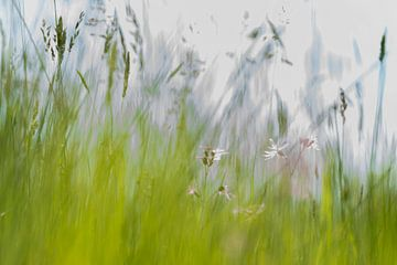 Het voorjaar sur Jose Gieskes