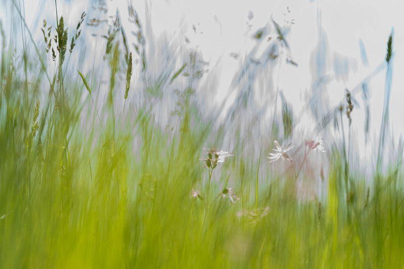 Het voorjaar van Jose Gieskes