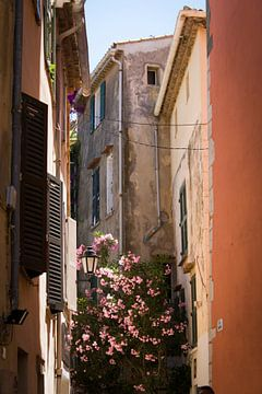 Saint Tropez sur ton vogels