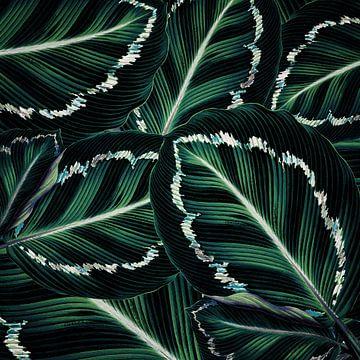 TROPICAL GREENERY LEAVES PATTERN-2 von Pia Schneider