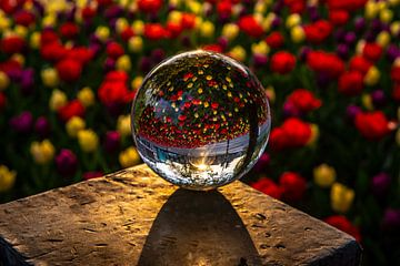 Ochtendgloren in een glazen bol van Ben Willemsen