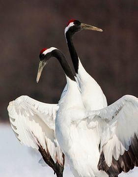 Chinese Kraanvogel (Grus japonensis) van Beschermingswerk voor aan uw muur