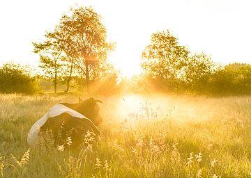 Kuh bei nebligem Sonnenaufgang von Marcel Kerdijk
