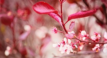 Blossom van Anita Servaas