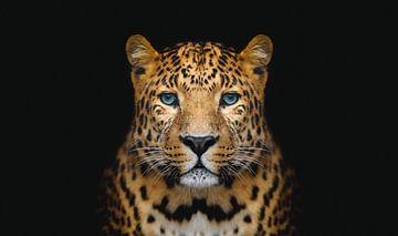 Panther vor schwarzem Hintergrund von Hendrik Jonkman