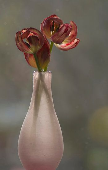Vaas met uitgebloeide tulpen