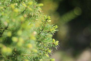 Pine tree van The Pixel Corner