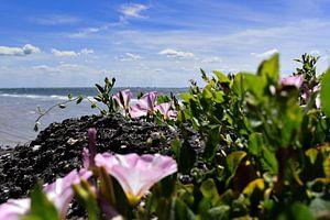 Roze bloem met zeezicht
