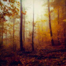Rainwood - October Forest van Dirk Wüstenhagen