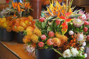 Tropische bloemen sur Michel van Kooten