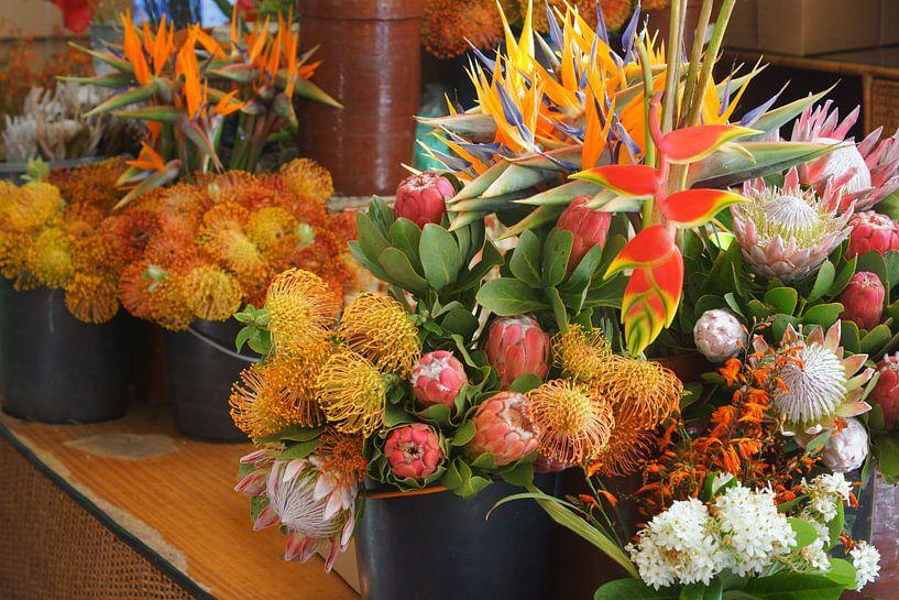Tropische bloemen van Michel van Kooten