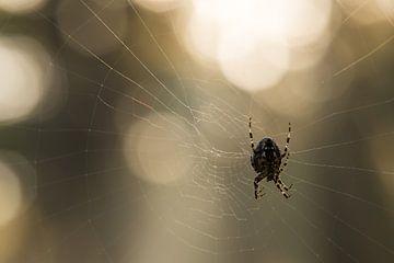 Spiderweb 2 sur