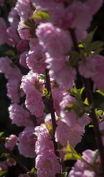 Bloesems in de bloei van Job Westerduin