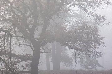 Bäume im Nebel von Tania Perneel