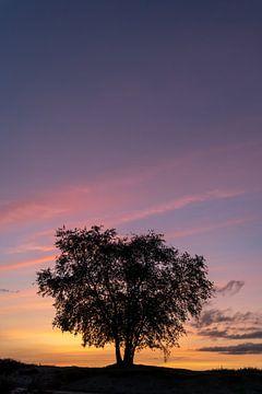 Sonnenuntergang im Ermelo-Moor II von Gerry van Roosmalen