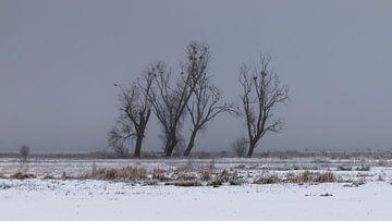 a winter landscape sur Koen Ceusters