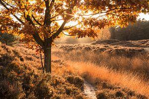 Eik in Herfstkleuren