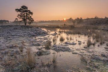 Eiskalten Morgen von Jan Koppelaar