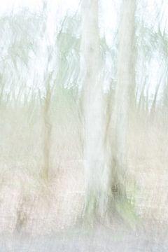 De berkenboom tweeling sur Chantal van Dooren