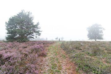 Landschapsfoto van Johan Honders