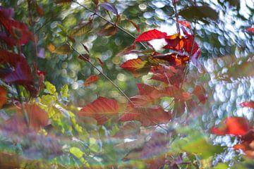 Herbstblätter von Marianna Pobedimova