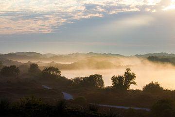 Wandelpad door duin met ochtend mist landschap van Menno van Duijn