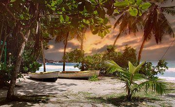 sea-palm-island van H.m. Soetens