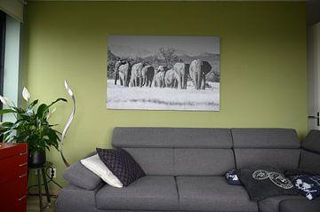 Klantfoto: Zwart-wit foto van kudde woestijnolifanten / olifanten bij Twyfelfontein, Namibië van Martijn Smeets