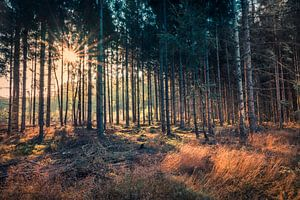 Deep in the Forest van Ronnie Schuringa