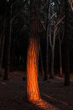 Gloeiende boomstam. van Rens Kromhout