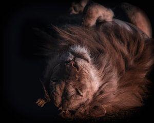 Slapende leeuw