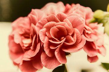 geranium in retro stijl van anne droogsma