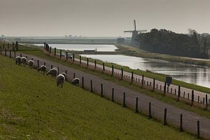 Texel Landschap van