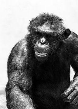 Chimpansee zwartwit portret sur Dennis van de Water