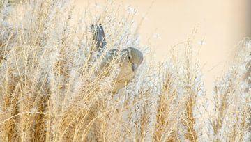 Musje in het gras van Connie de Graaf