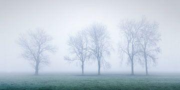 Mistige ochtend in de Alblasserwaard van Halma Fotografie