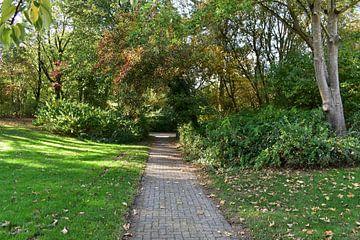 Herfst bos , herfst Bomen, herfst Park van Karin Waldner