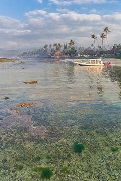 Koraal aan de kust van Candidasa van Marc Venema