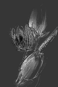 Tulp 1 (serie )