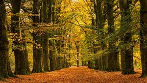 Prachtig herfst sprookjesbos van Bram van Broekhoven