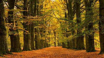 Prachtig herfst sprookjesbos van