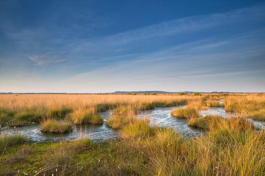 Morning swamp