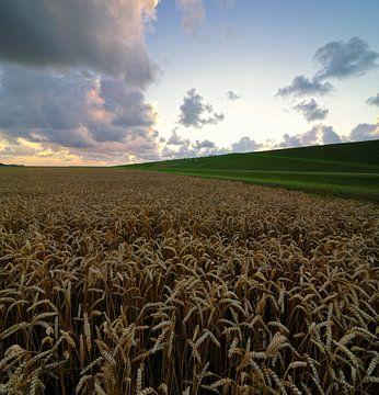 Wheatfield von Martijn Schornagel