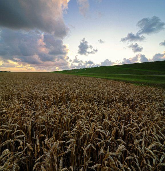 Wheatfield van Martijn Schornagel