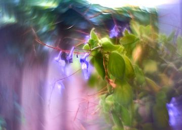 Kreativ mit Blumen (2) von Wim van Berlo