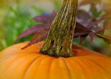 pumpkin time van Vera Laake