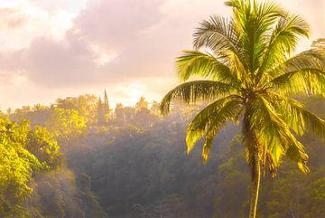 Palmboom zonsopkomst van I Should Shutter