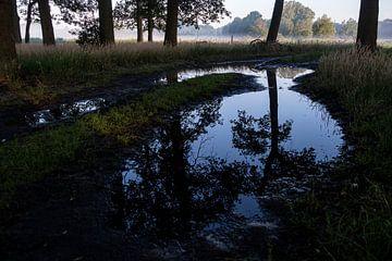 reflectie van eiken in een regenplas van Affect Fotografie