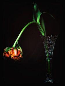 Tentorium Tulpen 2 von Henk Leijen